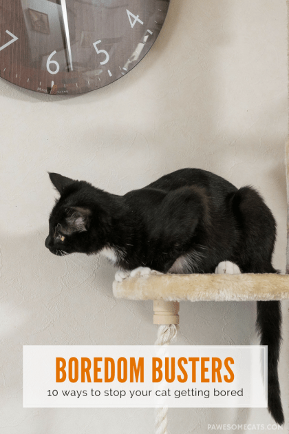 We discuss the signs of boredom in cats and share our 10 boredom busters to enrich your cat's home environment | Is Your Cat Bored? 10 Ways to Prevent Boredom