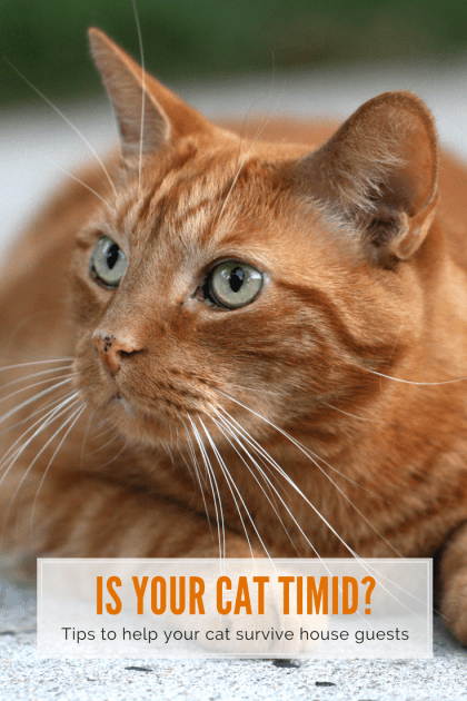 Helping your Timid Cat Survive House Guests