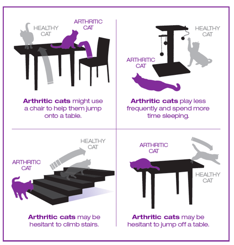 signs of arthritis in cats infographic
