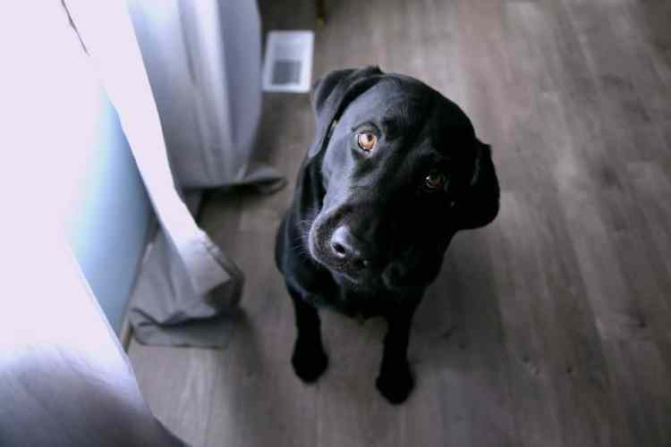 6 Basic Dog Training Obedience Commands