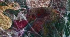 Das Nest D5web