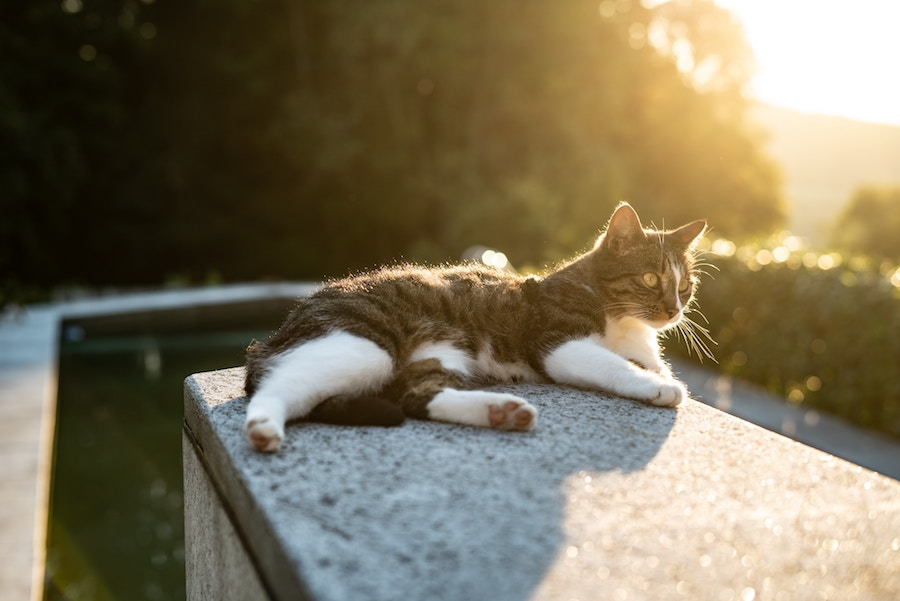 A cat lounges on a ledge with the sun behind it.