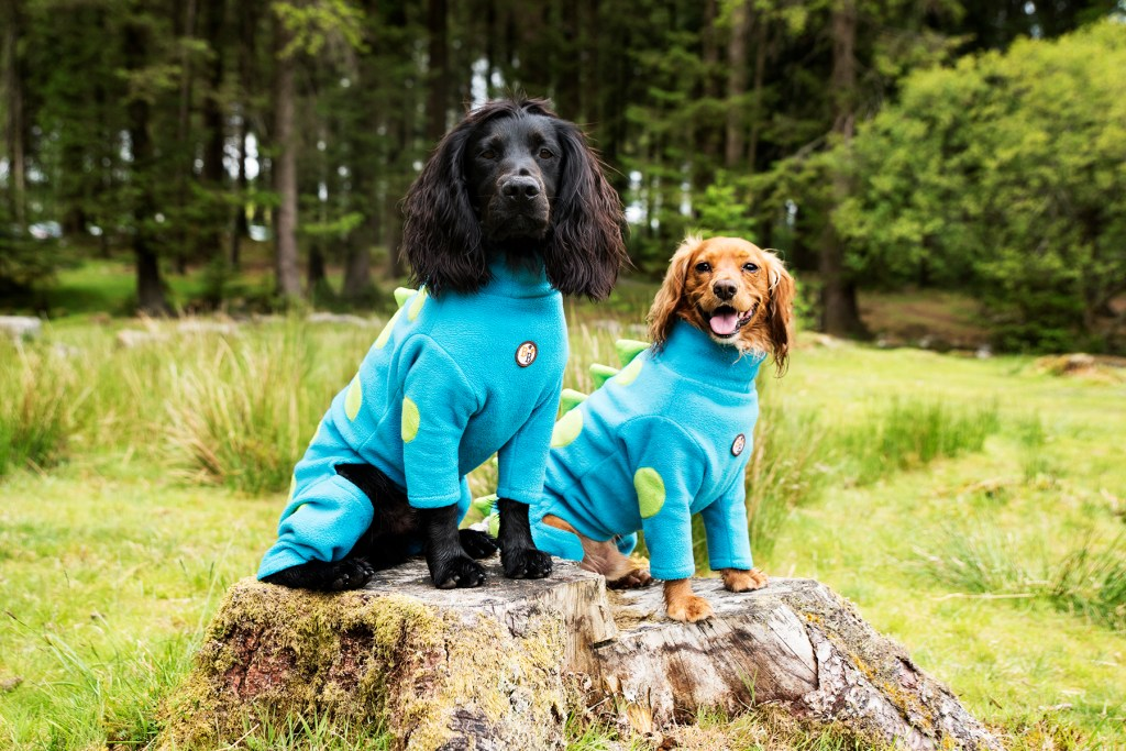 Choosing a Drying Coat for Your Dog