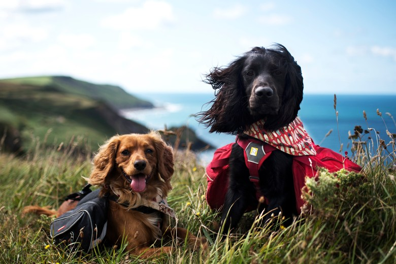 Welcome to Paws & Tors   Paws & Tors