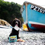Guru Pet Food | Paws and Tors