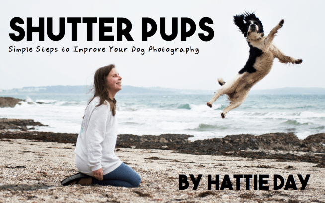 Shutter Pups: Simple Steps to Improve Your Dog Photography