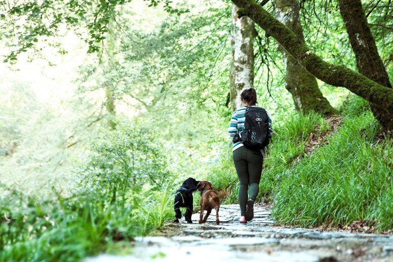 Exploring Plymbridge Woods with ACAI Activewear | Paws and Tors