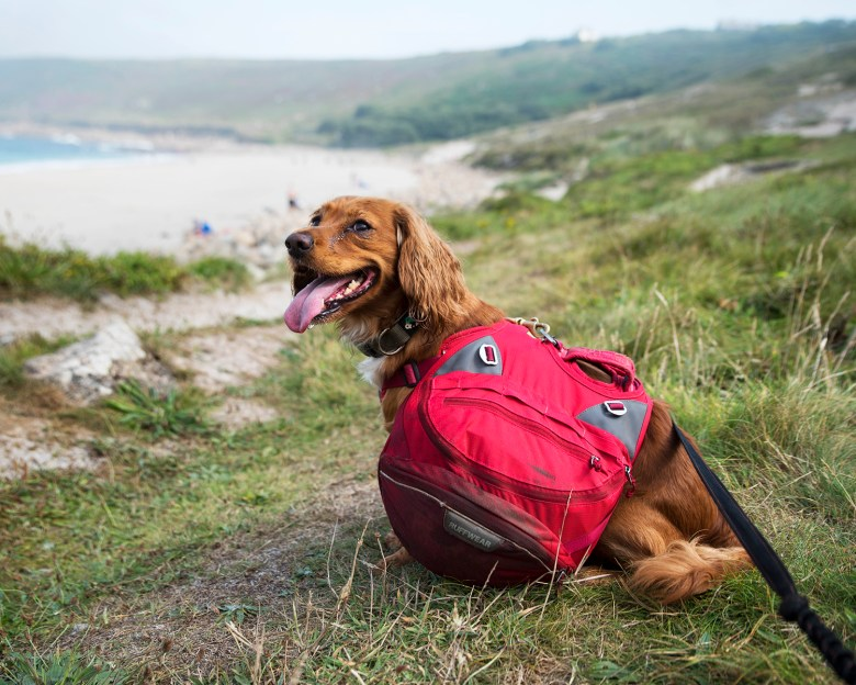 Why I Failed to Hike the Cornish Coast Path with My Dogs | Paws and Tors