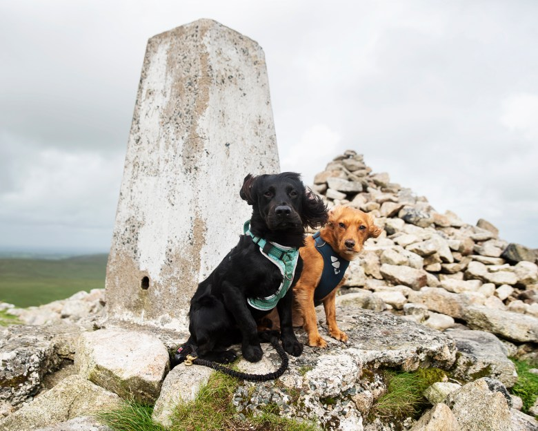 At Brown Willy Trig Point | Paws and Tors