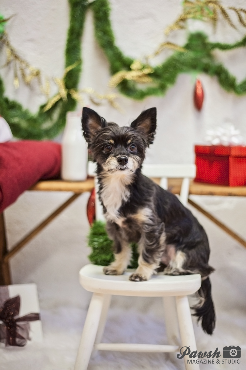 TORONTO PET PHOTOGRAPHER HAVE YOURSELF A MERRY LITTLE