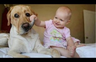 Funny babies annoying dogs - Cute dog & baby compilation