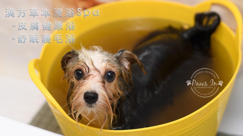 dog spa, 狗狗 spa, 元朗寵物美容, 寵物美容, pawsin 寵物美容, paws in 寵物美容