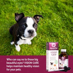 眼睛保健,預防白內障,白內障,貓犬眼睛保健,vision support for pets, dog eye suppiments, cat eye suppliments