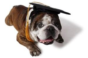 Winston-the-answer-dog[1]