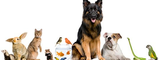 Paws In Training The Joy of Petsitters
