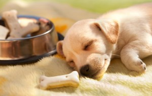 pup sleeping foodbowl