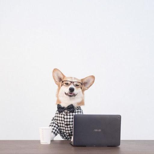 Dog on Social Media