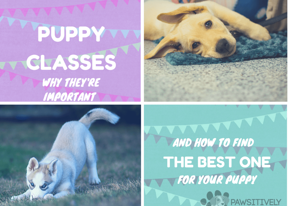 The Importance of Puppy Class (And how to choose the right one)