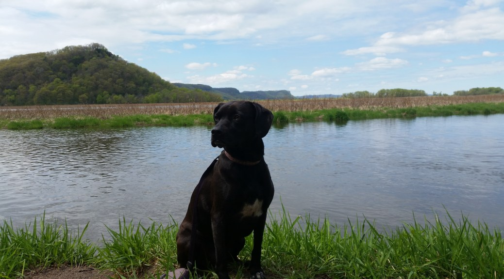 Glia hiking at Perrot State Park