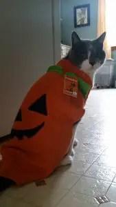 Cat Pumpkin Costume