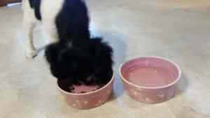 Food and Water Bowls