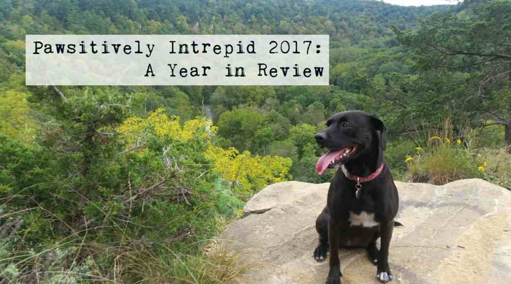 Pawsitively Intrepid 2017 - Glia hiking at Whitewater