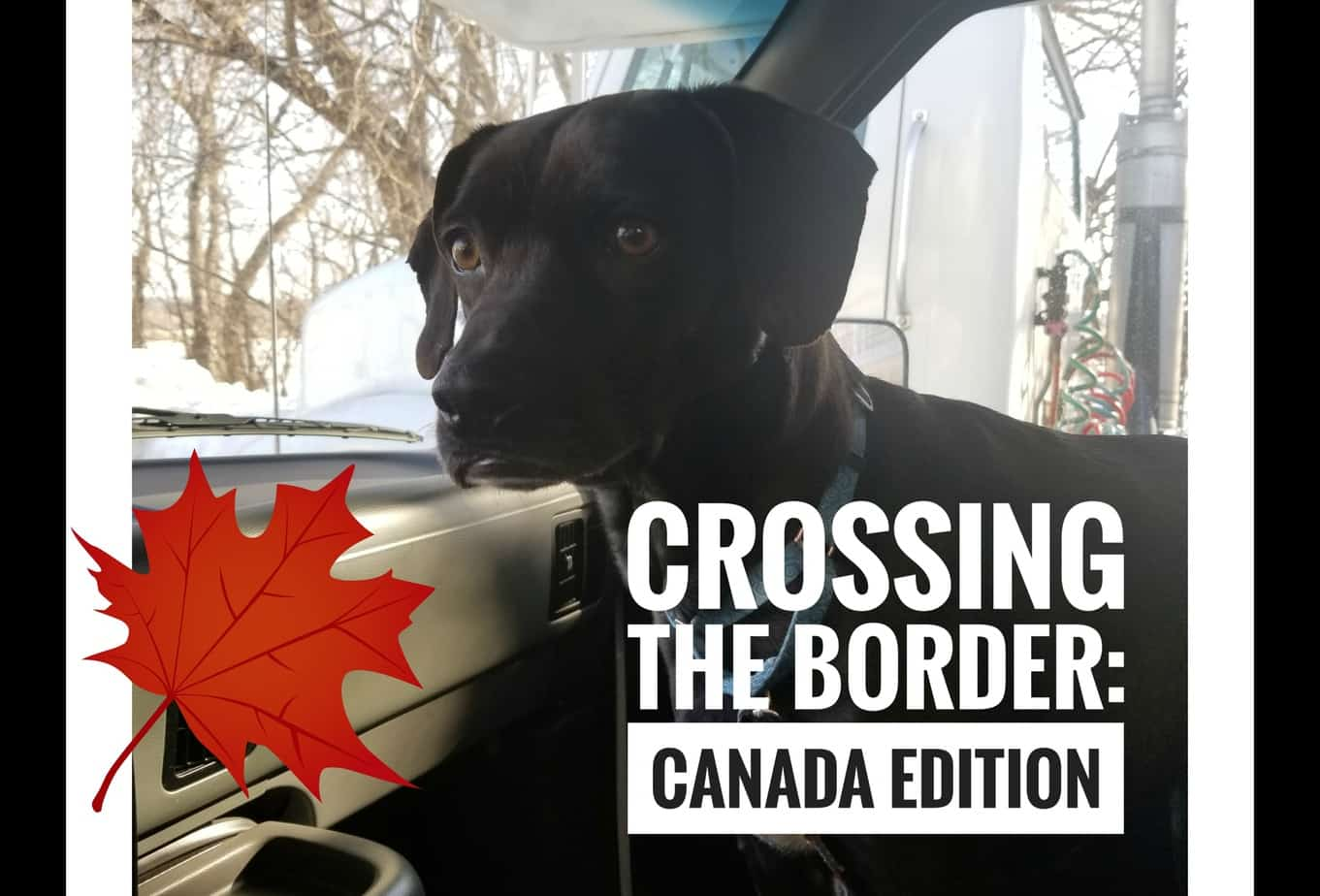 Crossing the Border with Pets: Canada Edition