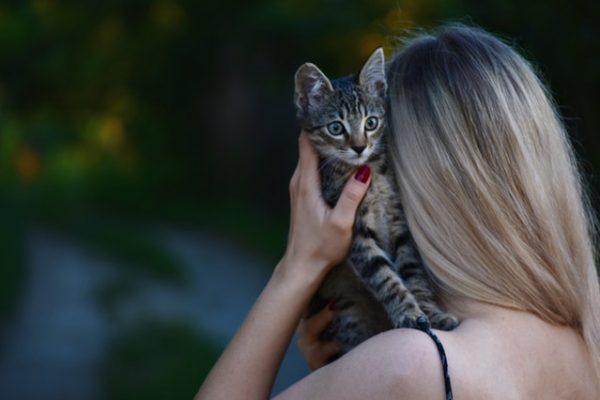 animal-cat-domestic-animal-1323256