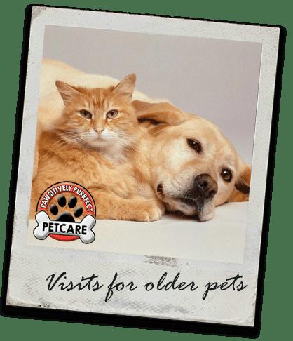 daily pet care visits bedlington