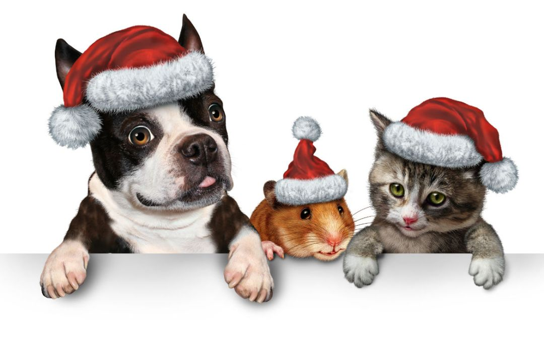 Christmas Holidays and Pets