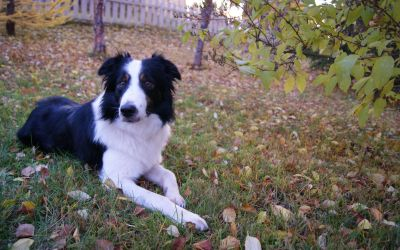 Signs to Watch for Take Your Dog to the Veterinarian