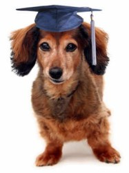 Dog in graduation cap