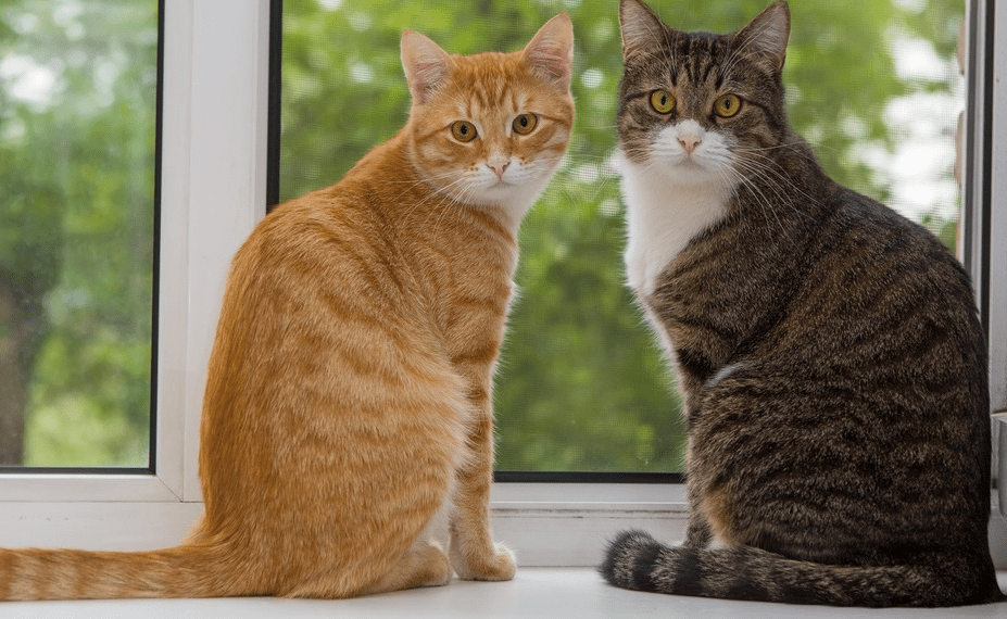 11 rare cat coat colors some are freaky pawsome kitty