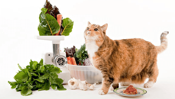Dry Cat Food Without Protine