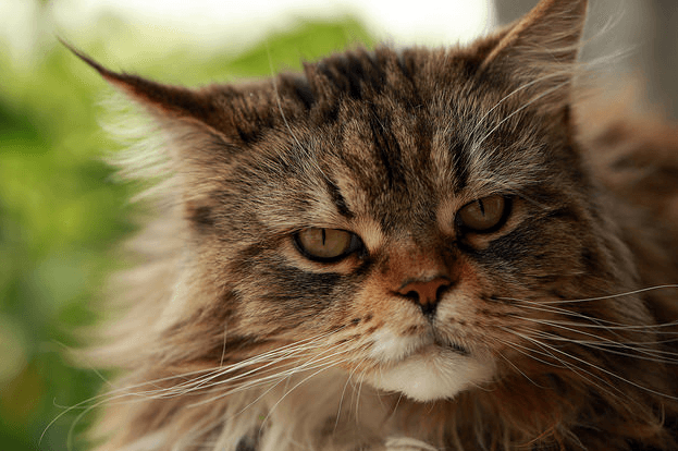 cats joint pain