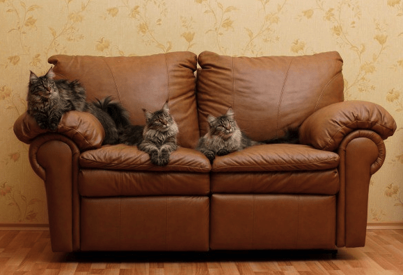 How to Keep Cats Off Furniture Permanently Pawsome Kitty