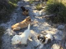 Stara, Maddie, Archie, Pippa and Fletcher