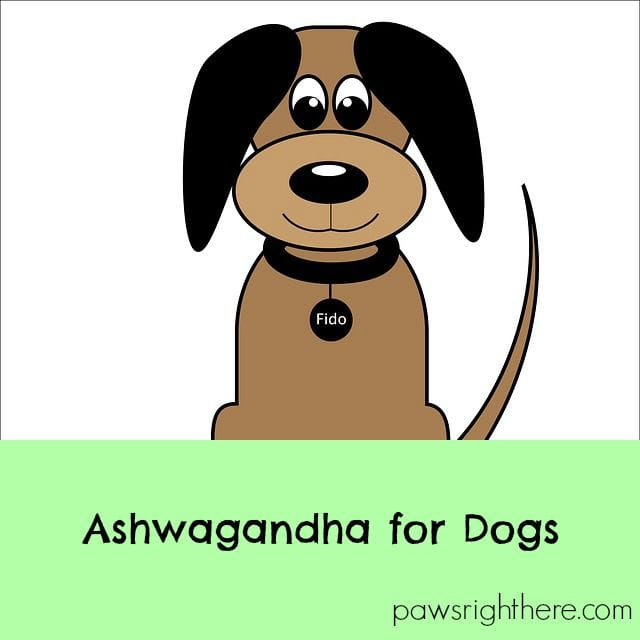 ashwagandha for dogs