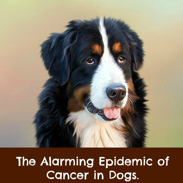 Likelihood of cancer in dogs