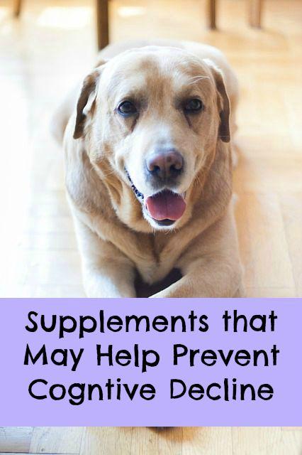 canine cognitive supplements