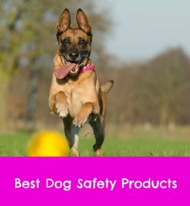 dog safety products
