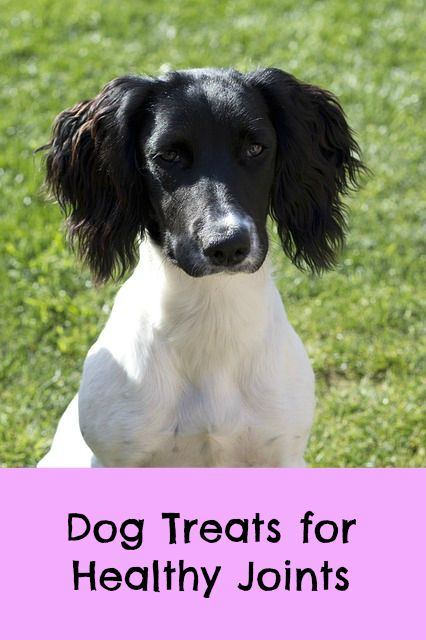 dog treats for joints