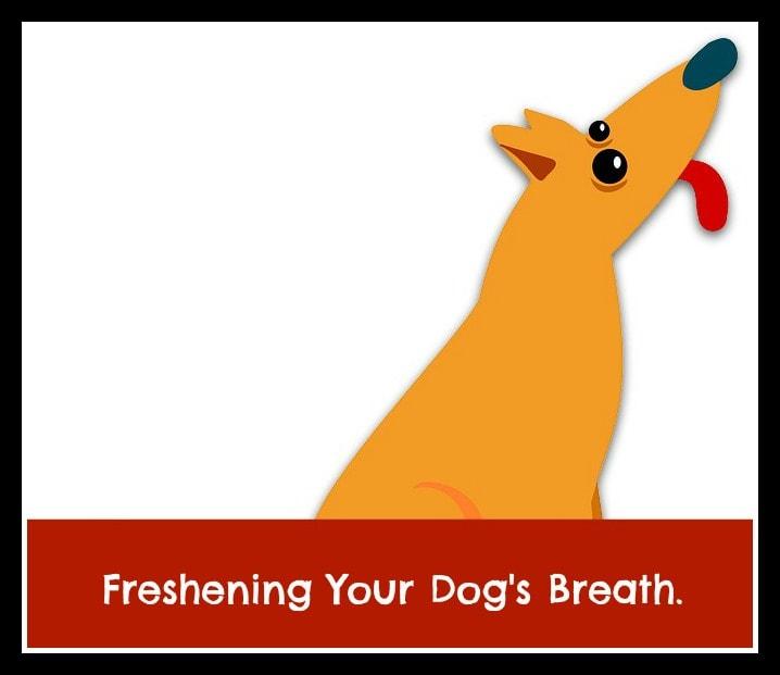foul breath in dogs