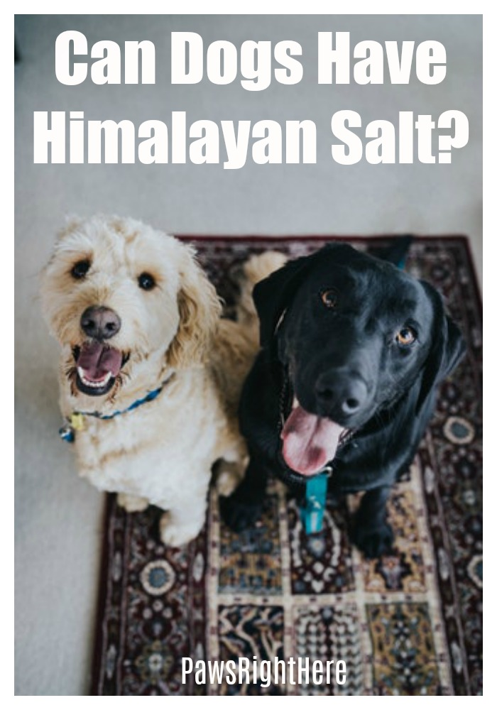 Is Himalayan salt good for dogs