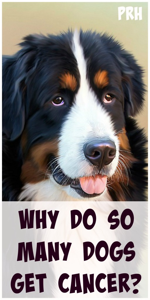Why do so many dogs get cancer