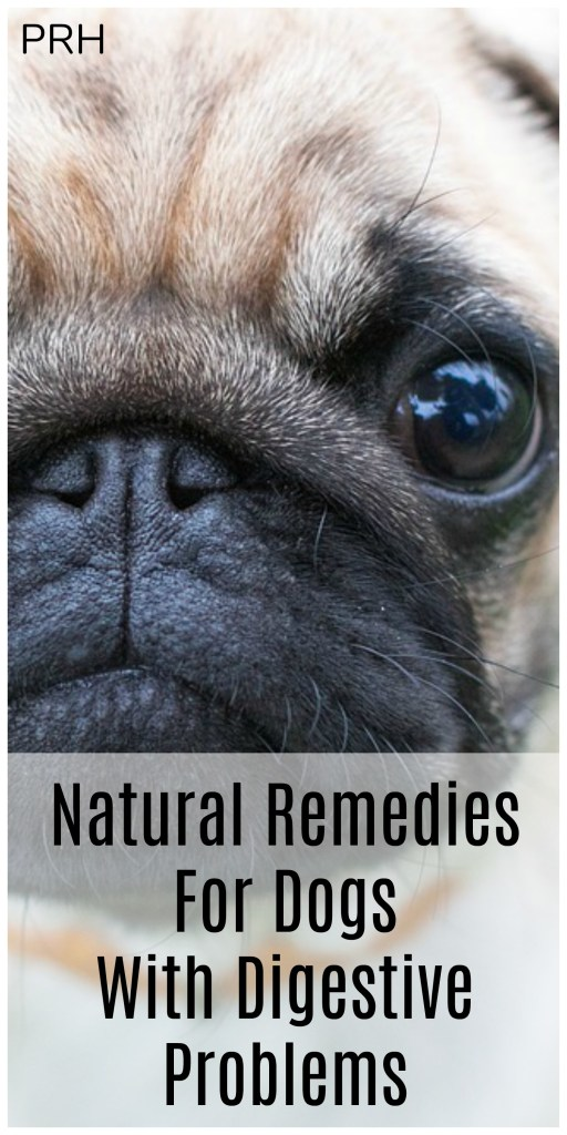 Natural remedies for dogs with digestive problems