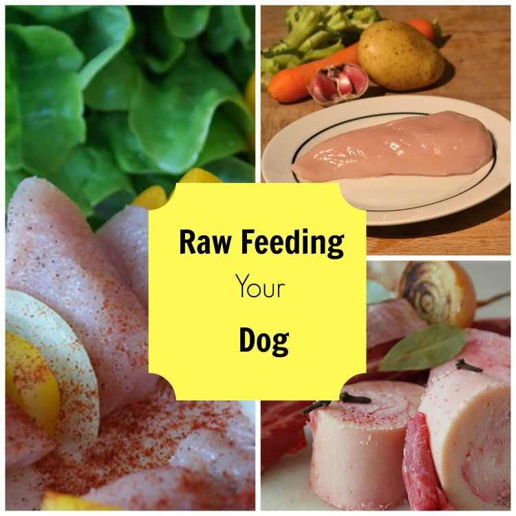 raw feeding your dog