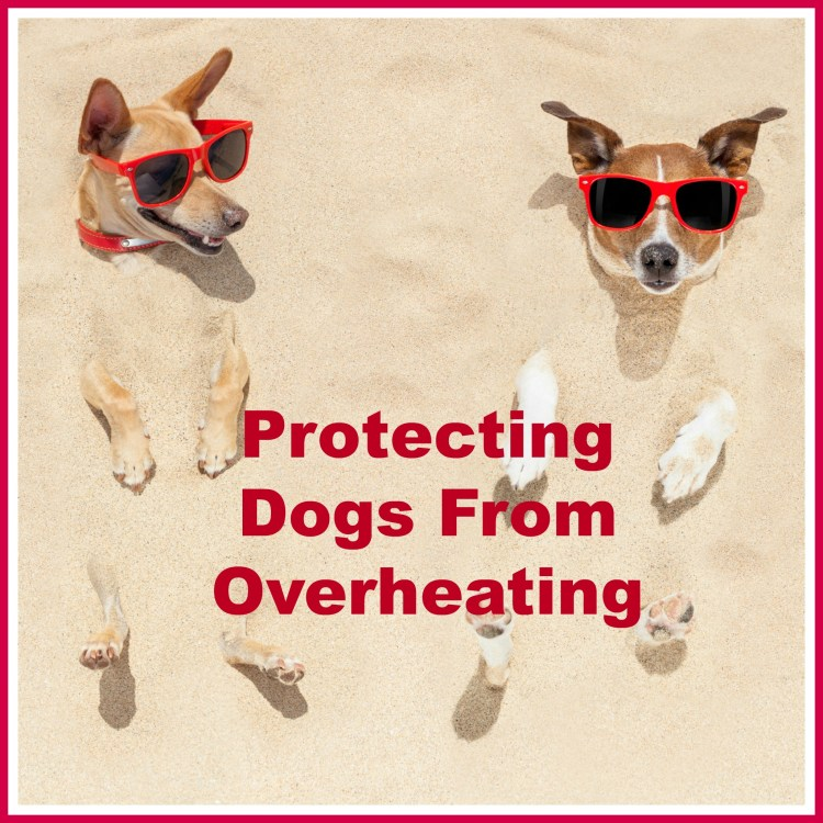 Protecting dogs in the heat