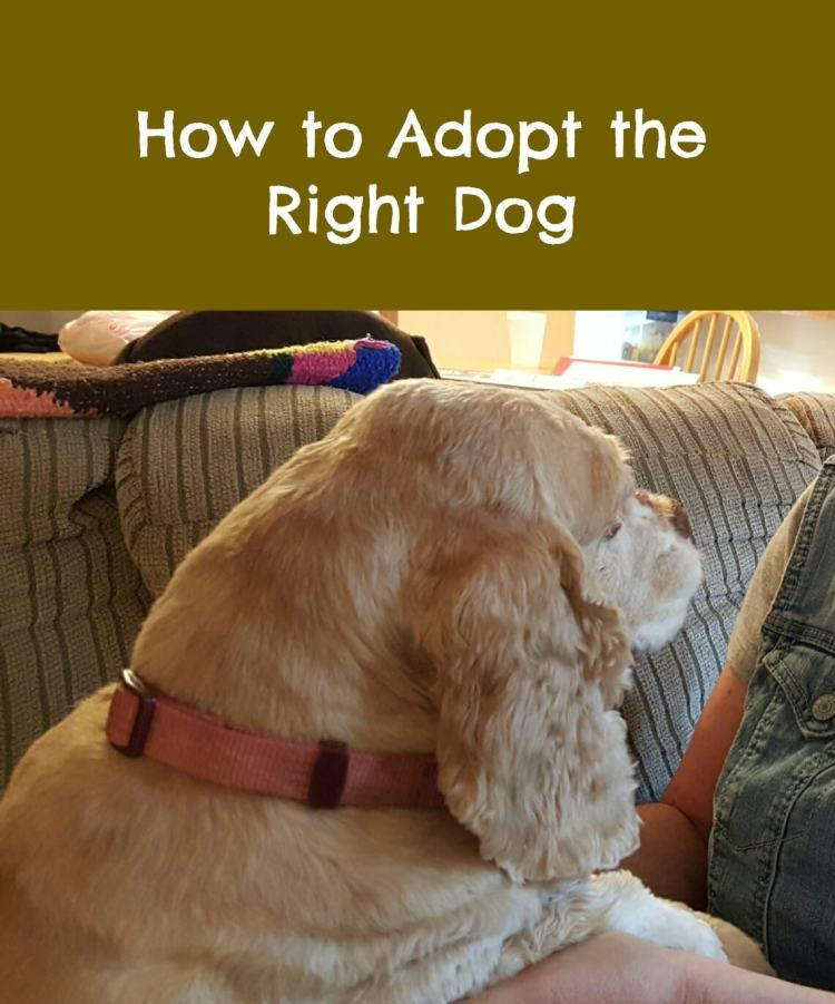 how to adopt the right dog