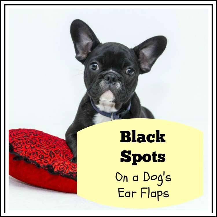 Black Spots on a dog's ear flaps